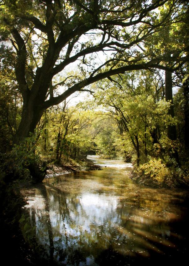 Flint Hills Stream
