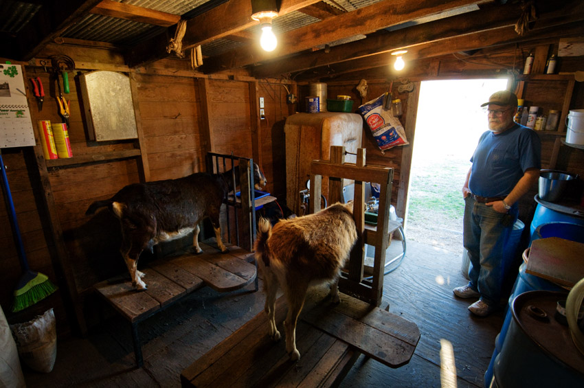 Milk Goats