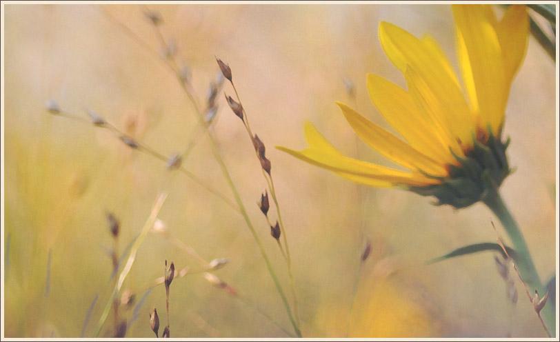 Seed Heads & Sunflower