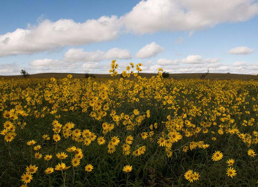 Ann's Prairie