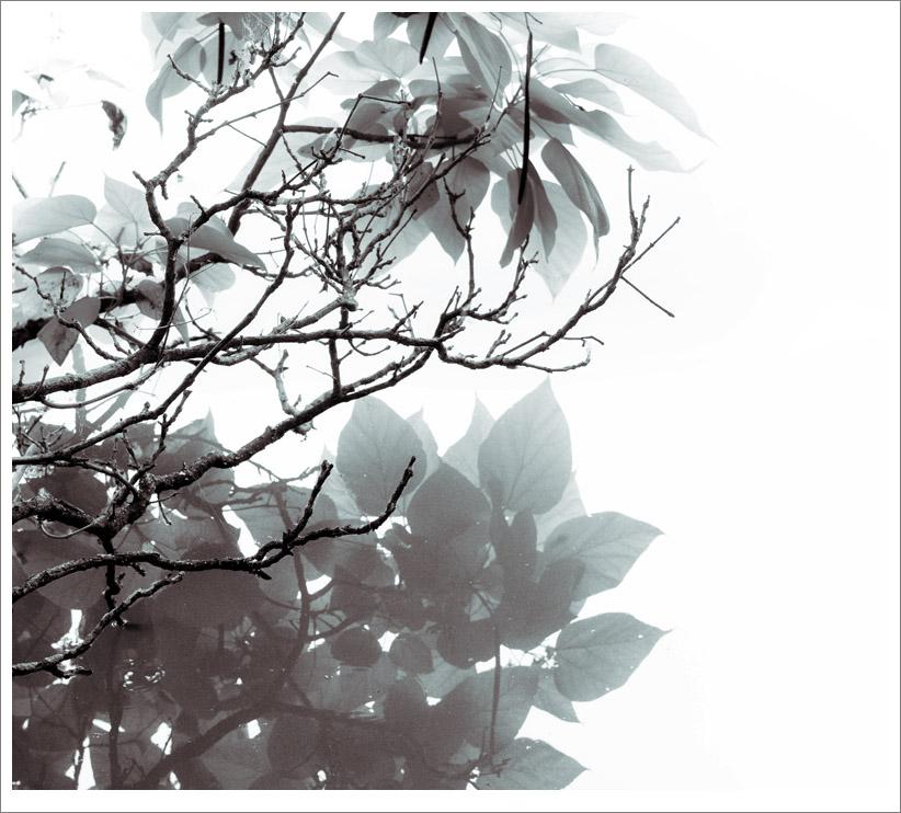 Reflections – Bennington Lake