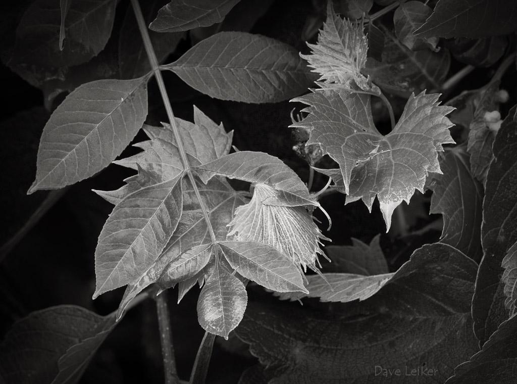 Woodland Leaf Study