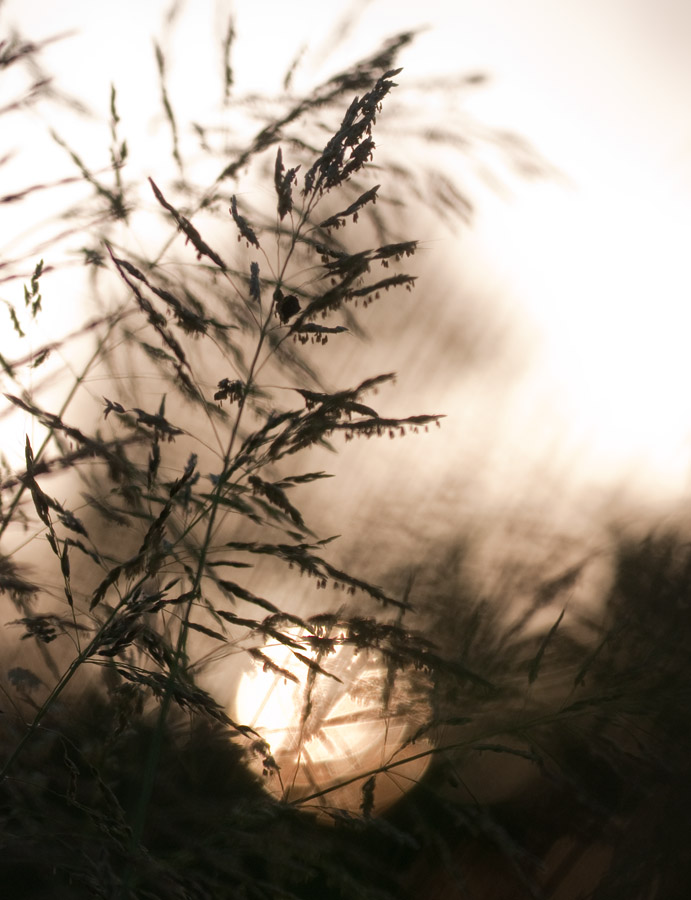 Setting Sun in the Tallgrass