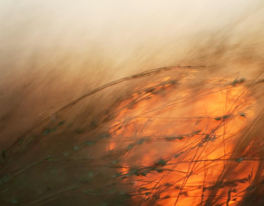 Grasslands Sunset #2