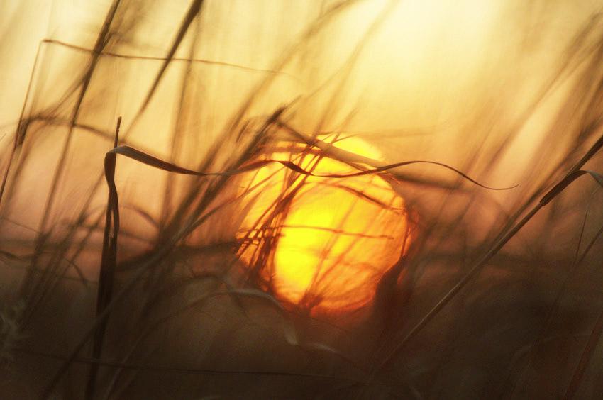 Grasslands Sunset #3