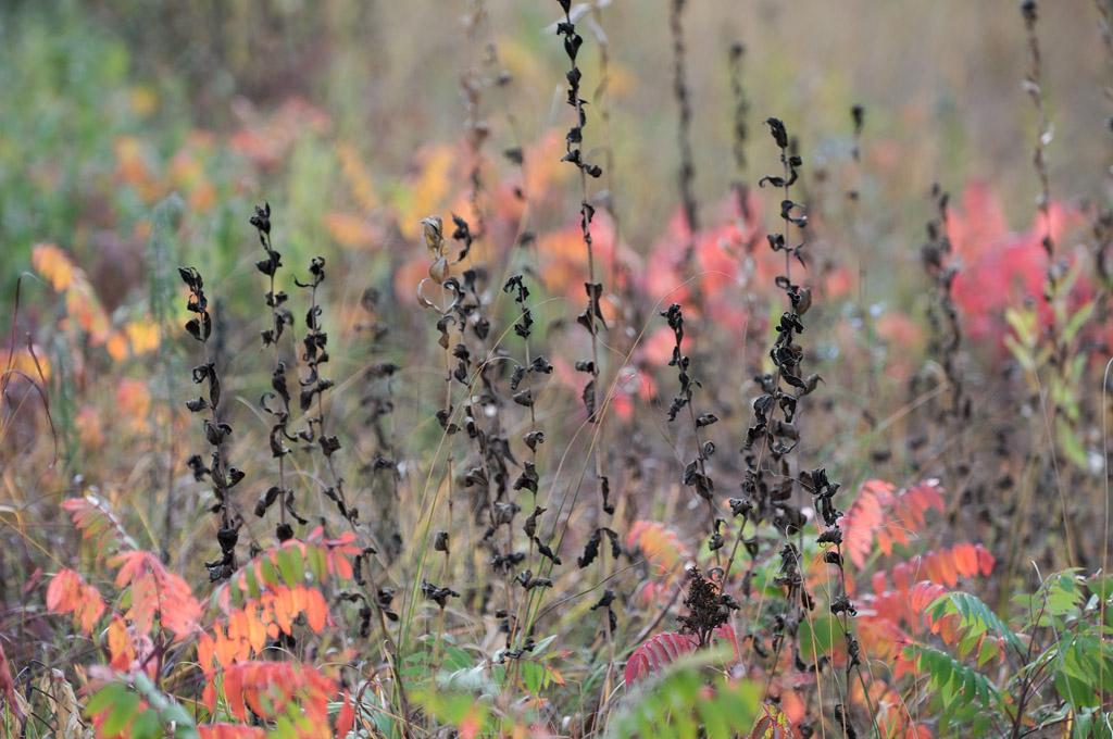 Autumn – Soloscheid Road