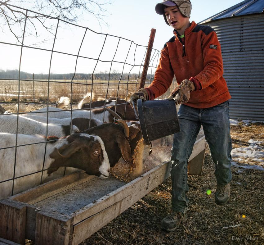 Randal #2 – Feeding the Goats