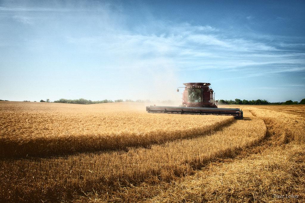 Wheat Harvest 2014