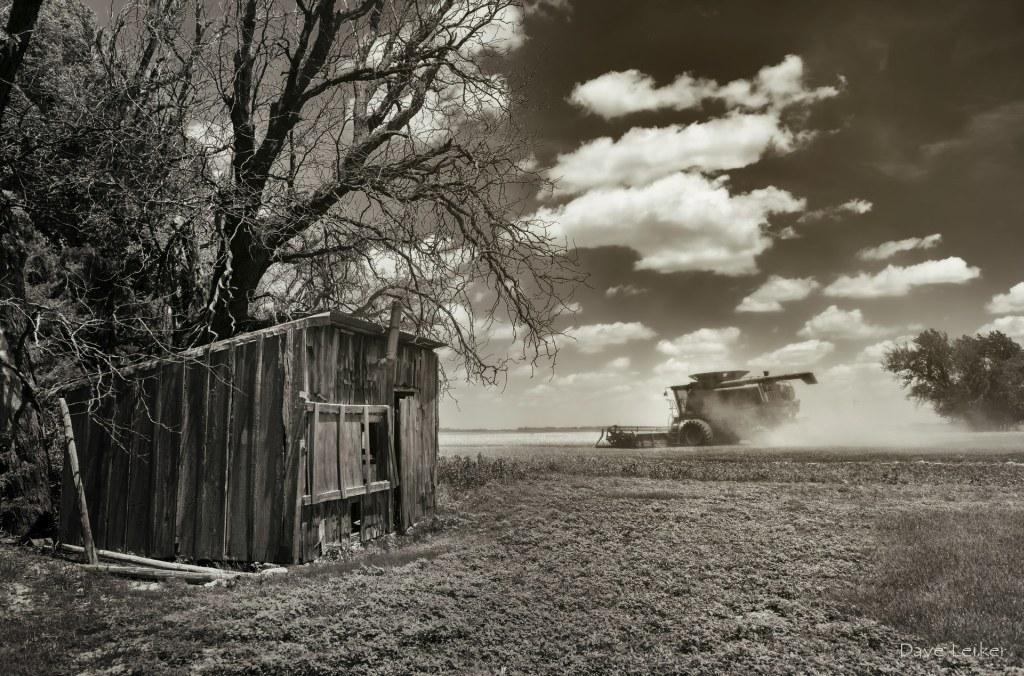 Wheat Harvest & Shack