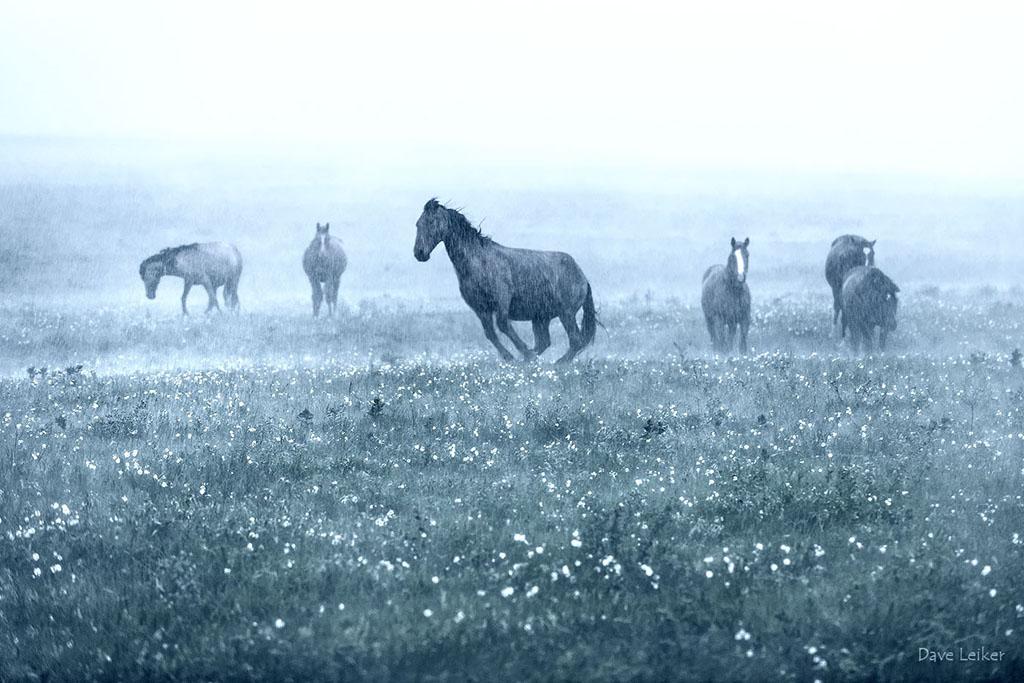 Wild Mustangs in a Rain Storm – Blue