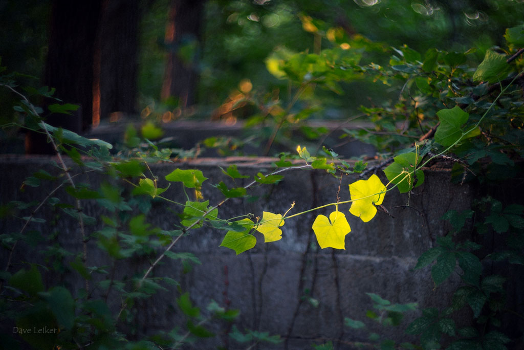 Yellow Leaves and Concrete Water Basin