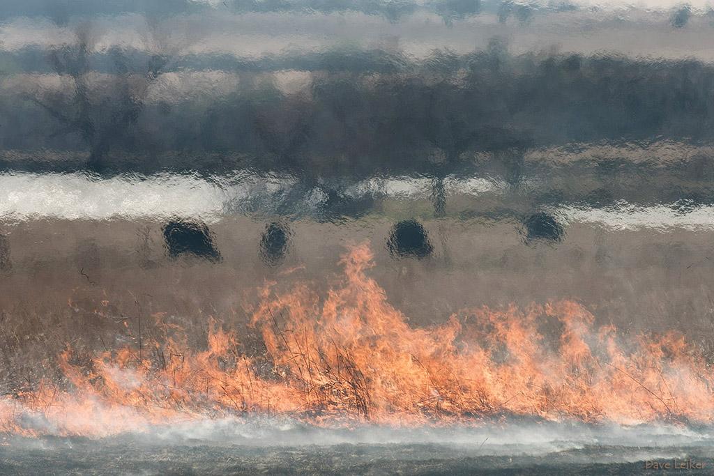 Prairie Burn and Cattle