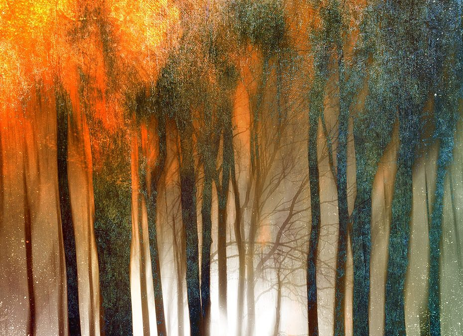 Burning Woods