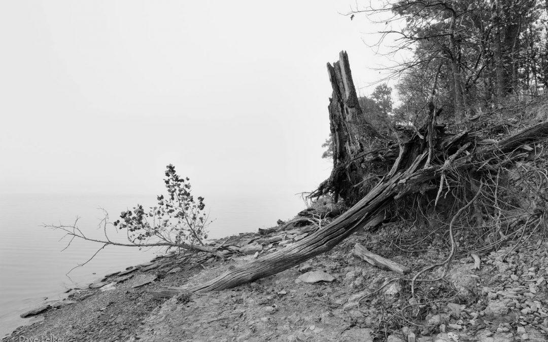 Melvern Shore and Fallen Tree
