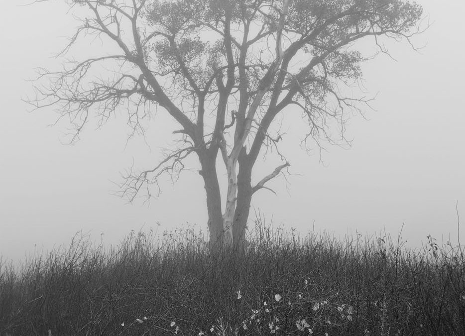 Misted Tree – Road 330