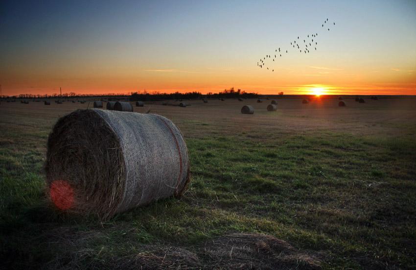 Gold-Season Farmland