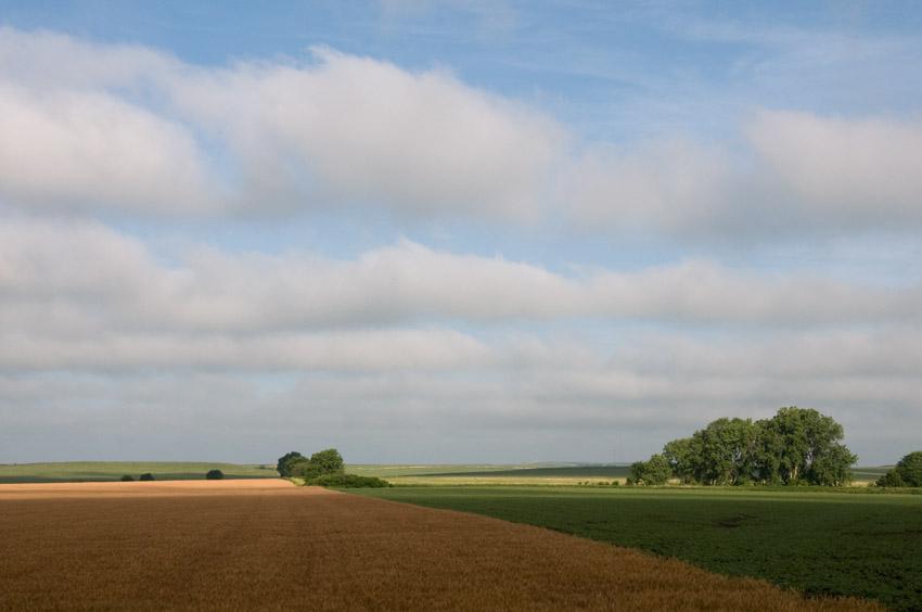 Cropland 1