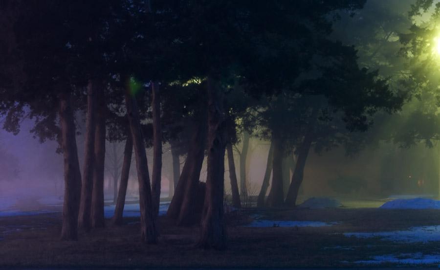 Under the Night Lights