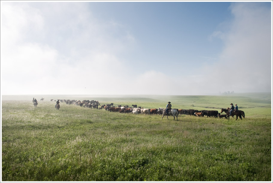 Flint Hills Cattle Drive
