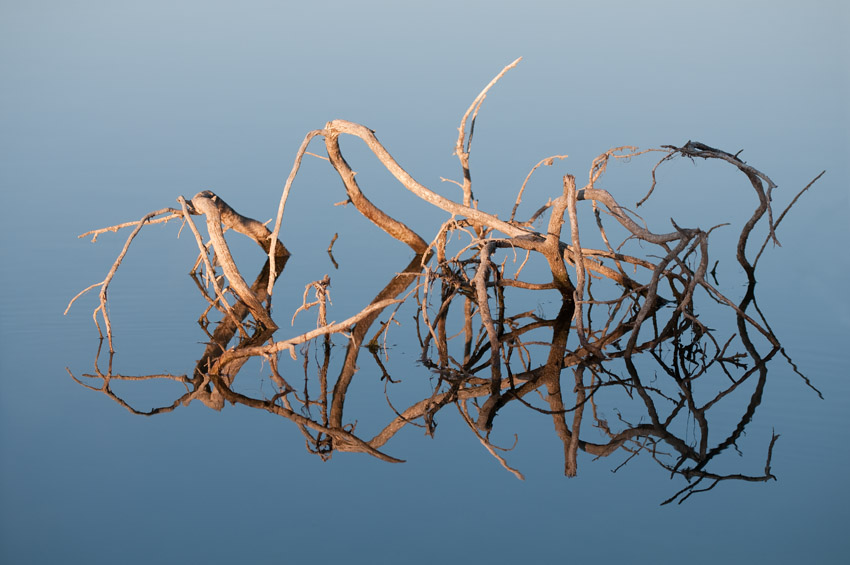 Reflecting Limbs