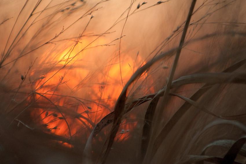 Grasslands Sunset #1