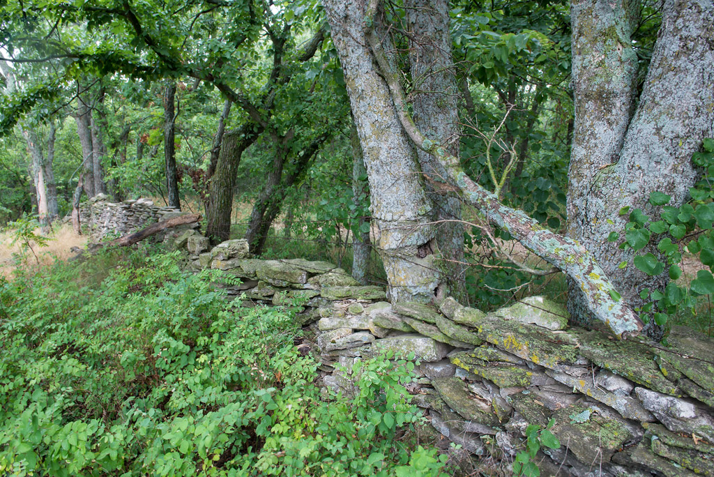 Stone Wall and Trees – Chalk Road