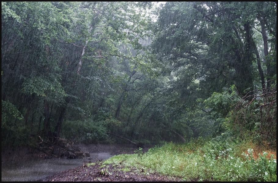 Flint Hills Rain Forest
