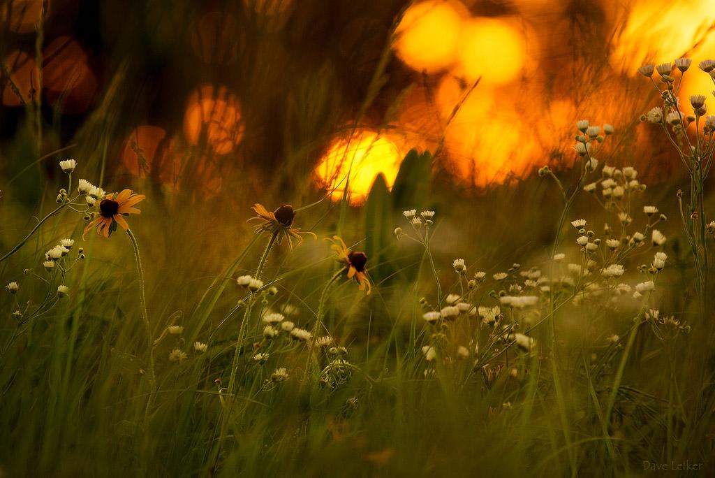 Prairie Random – 19 June at Sunset