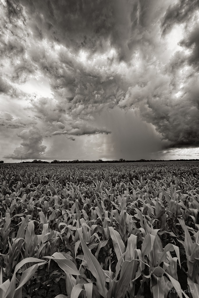 Corn-Row Rainstorm