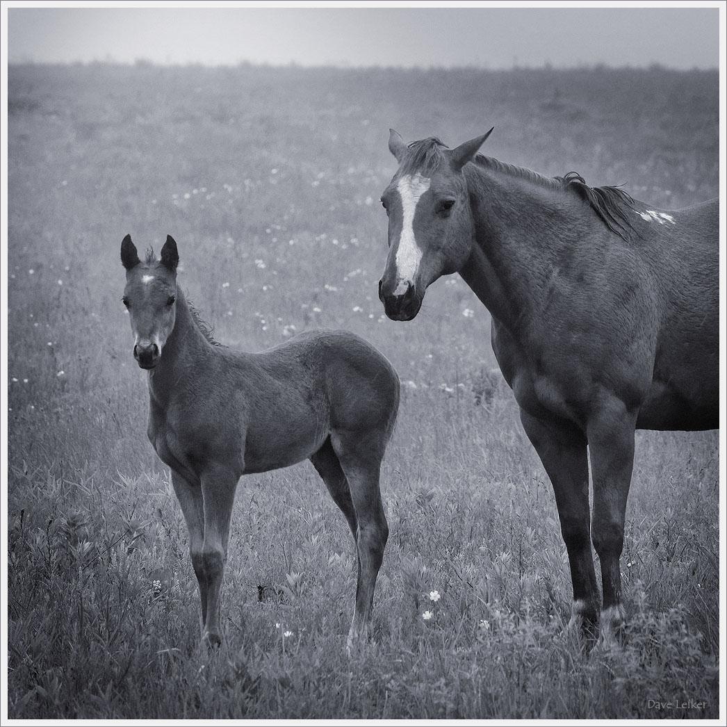 New Prairie Colt