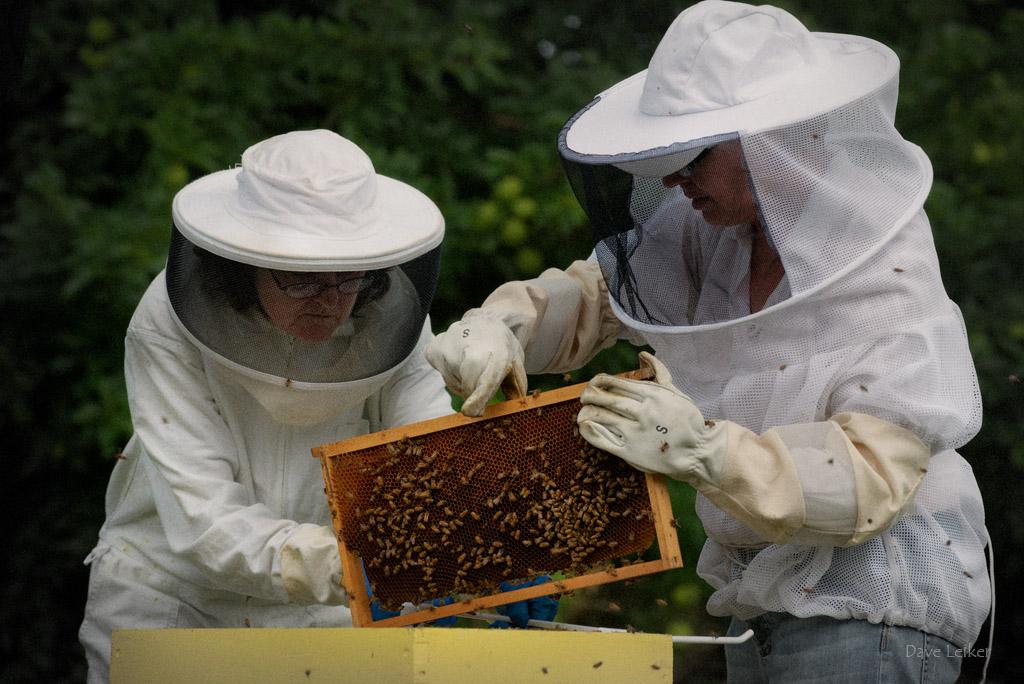 Bee Keeping #2