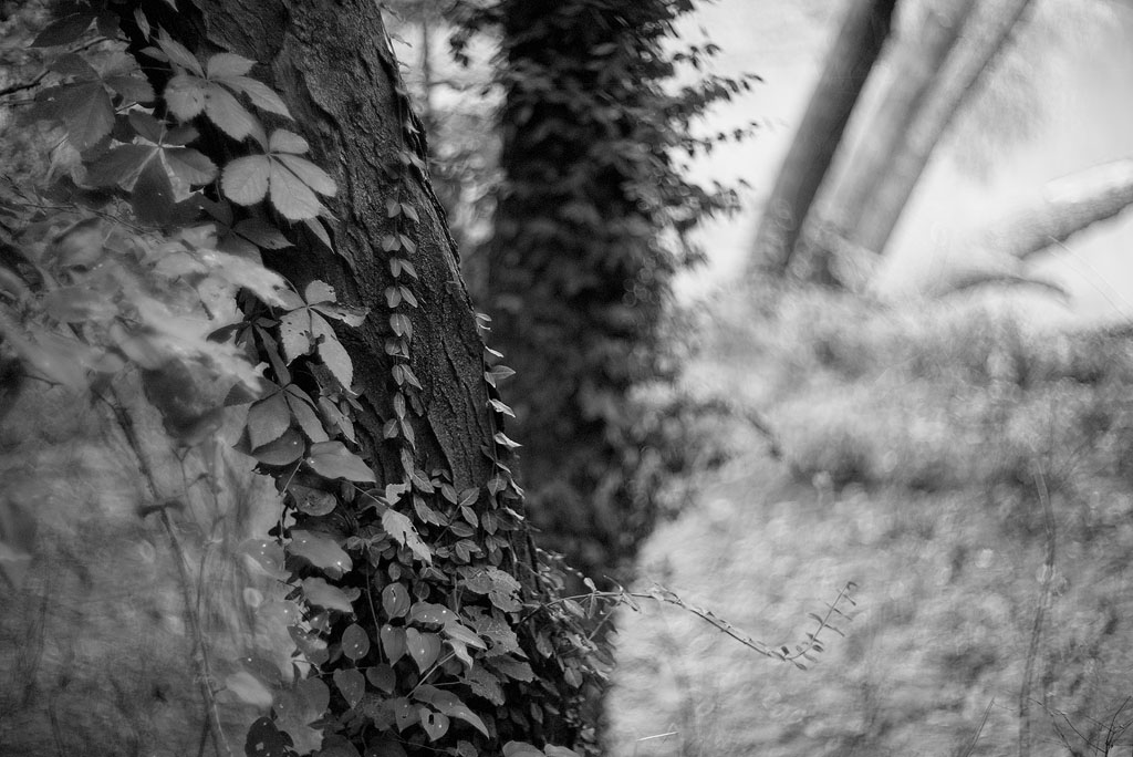 VIne-wrapped Trunks