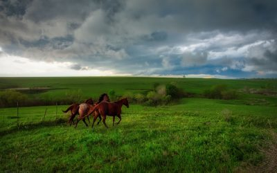 Three Horses in a pasture as a storm gathers