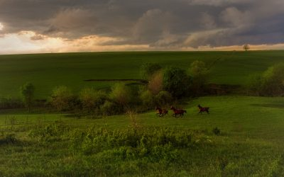 Horses running across a green expanse of prairie during a gathering storm