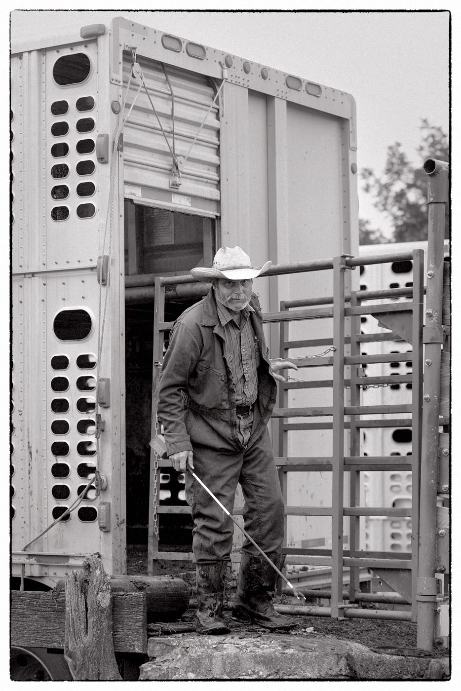 Cattle Truck Driver