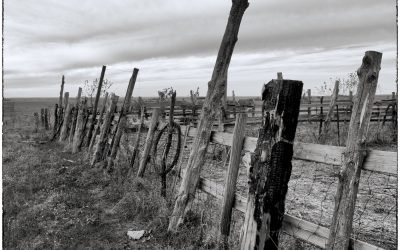 aged wooden corral fence posts