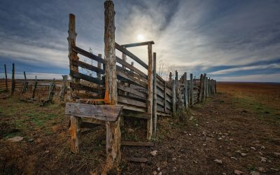 Rustic wooden cattle chute