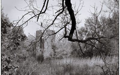 black and white photo of hanging limb and old silo with overgrown brush