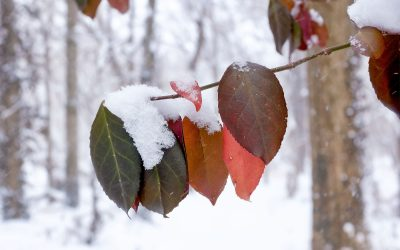 multicolored leaves with snow