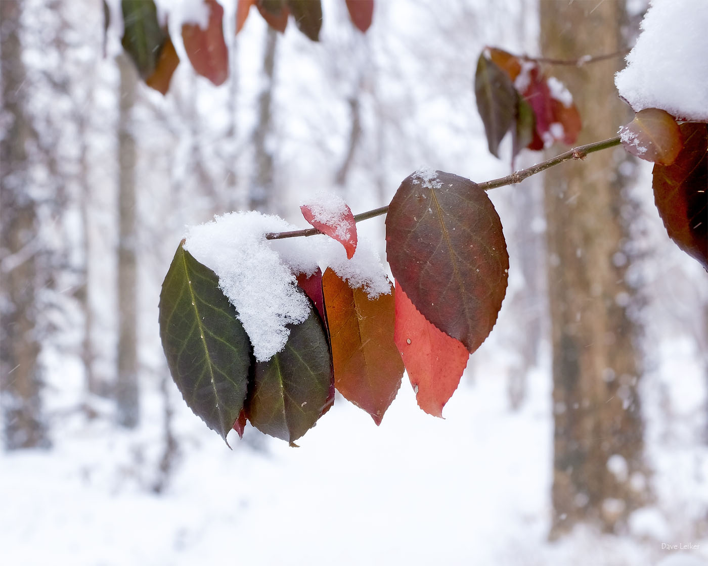 Leaves Along a Winter Woodland Trail