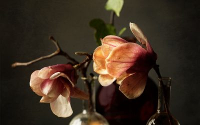 magnolias in old chemistry beakers