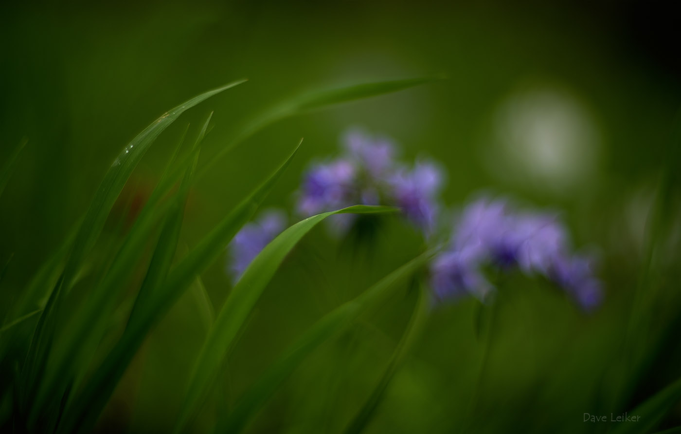 Fresh Greens and Out-of-focus Wild Blue Phlox