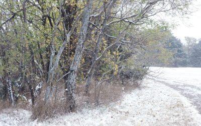 Snowbound Trees