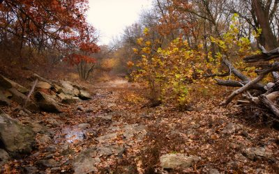 Autumn view of the Willow Creek stream bed