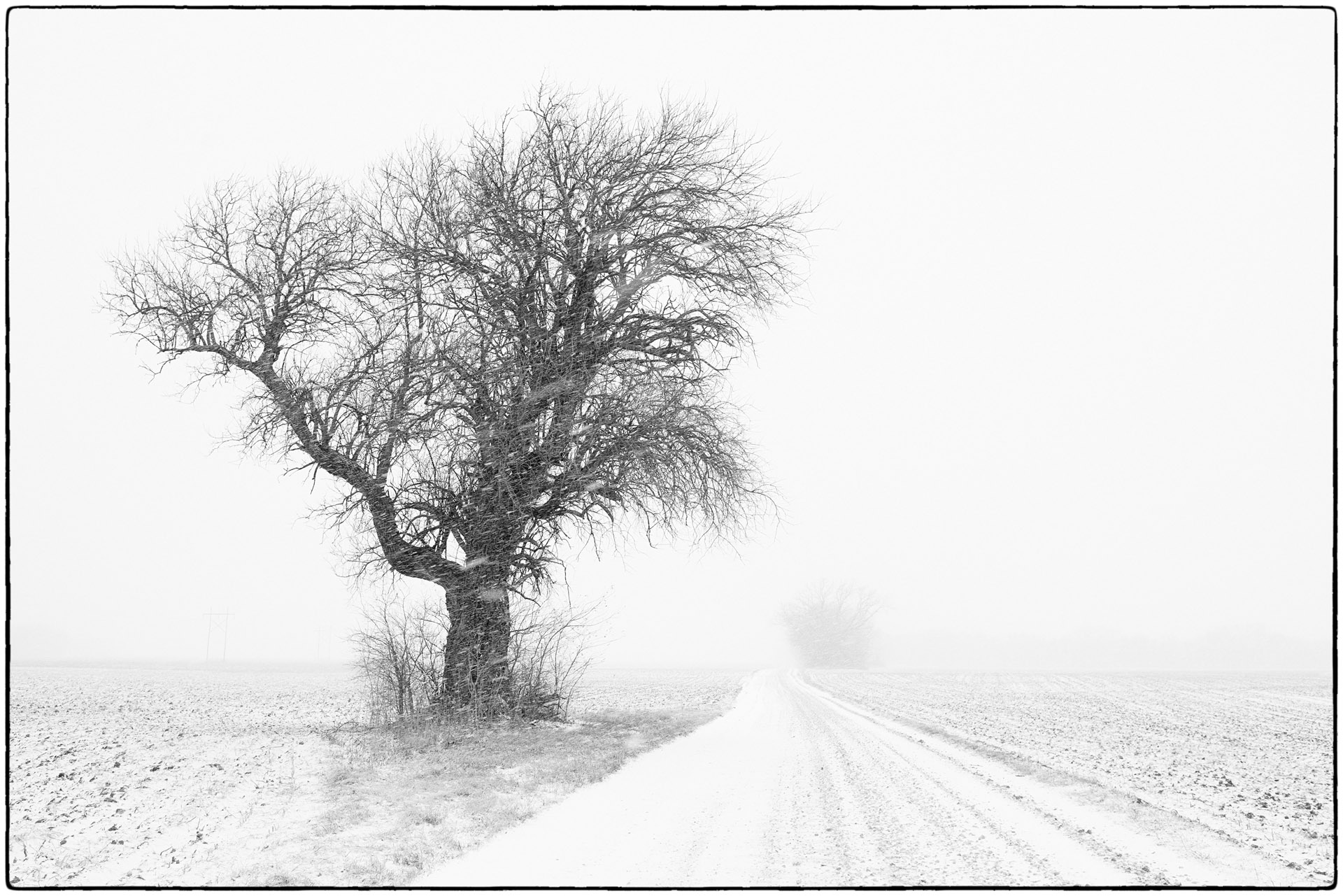 Winter Tree and Country Road