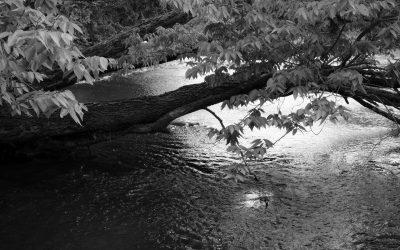 Limb hanging above Flint Hills stream