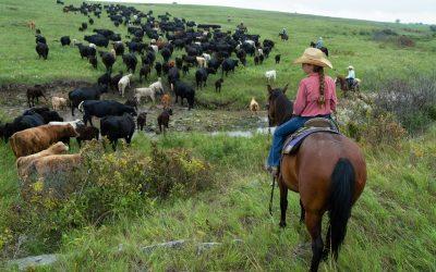 girl on horseback with cattle crossing stream